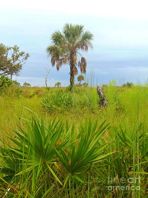 Photograph - Palmetto And Palm by Lou Ann Bagnall