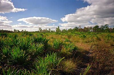 Photograph - Palmetto And Sedge. Triple N Ranch W.m.a. by Chris  Kusik