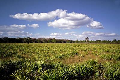 Palmetto Field. Three Lakes W.m.a. Art Print