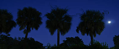 Photograph - Palmetto Moon by E Karl Braun