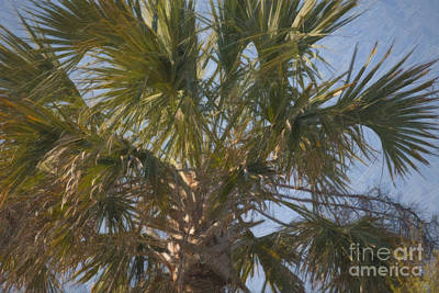 Photograph - Palmetto Spendor by Dale Powell
