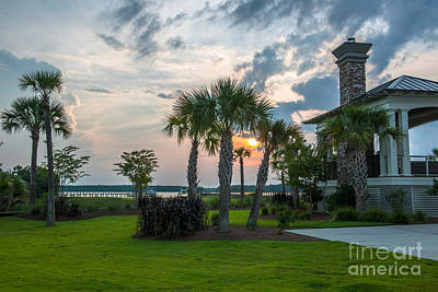Photograph - Palmetto Splendor by Dale Powell