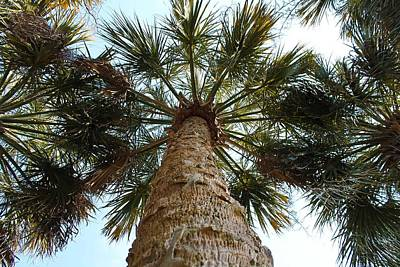 Photograph - Palms Above by Jessica Brown