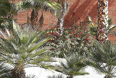 Photograph - Palms Against Brick by Joe Kozlowski