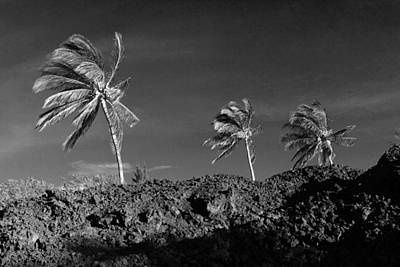 Photograph - Palms And Lava by Mary Haber