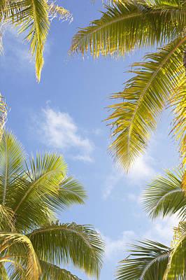 Palms And Sky Print by Brandon Tabiolo