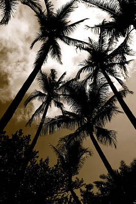 Photograph - Palms by AR Annahita