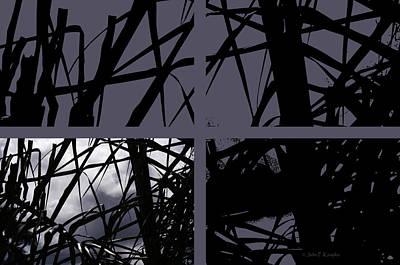 Photograph - Palms At Night by John Knapko