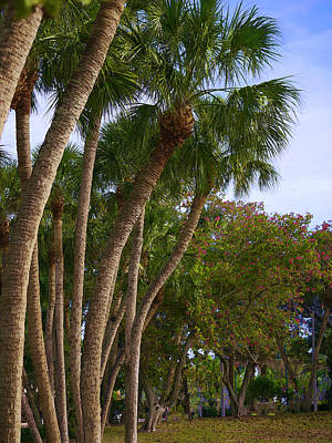 Photograph - Palms At St. Armands Circle by Herb Paynter
