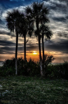 Palms At Sunet Art Print