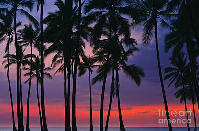 Sean - Palms at Sunset at Puuhonua o Honaunau National Historical Par by Henk Meijer Photography
