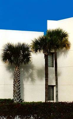 Palms Art Print by Bruce Lennon