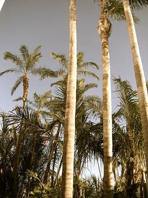 Photograph - Palms by Brynn Ditsche