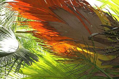 Photograph - Palms by Debbie Cundy