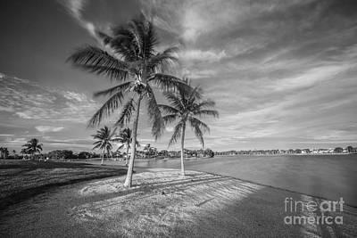 Photograph - Palms by Hans- Juergen Leschmann