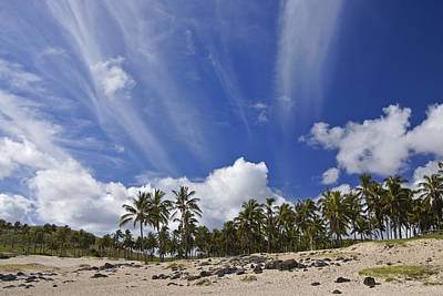 Photograph - Palms In Paradise by Michele Burgess