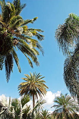 Photograph - Palms In The Sky by Aimee L Maher Photography and Art Visit ALMGallerydotcom