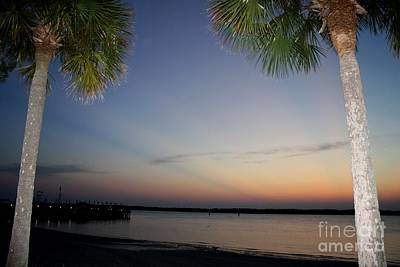 Mike Grubb Wall Art - Photograph - Palms In The Sun by Michael Grubb