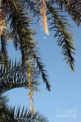 Palms In The Wind Art Print by AR Annahita