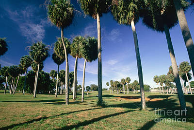 Aguadilla Photograph - Palms Of  Point Borinquen Golf Course by George Oze