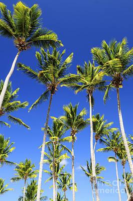 Priska Wettstein Land Shapes Series - Palms on blue sky by Elena Elisseeva