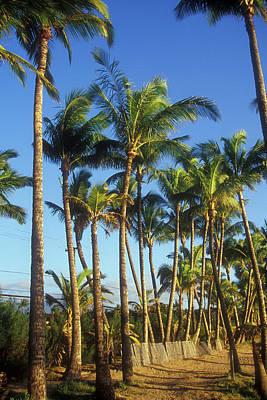 Photograph - Palms On Hawaii Beach Trail by John Burk