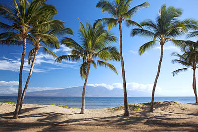 Photograph - Palms On Lanai by Jenna Szerlag