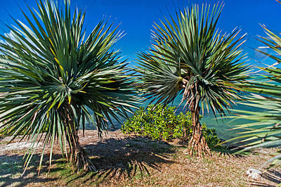 Photograph - Palms On The Beach. Mauritius by Jenny Rainbow