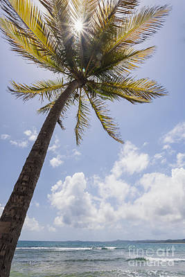 Photograph - Palms Trees Along Luquillo Beach In Puerto Rico by Bryan Mullennix