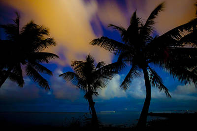 Photograph - Palms V by Scott Meyer