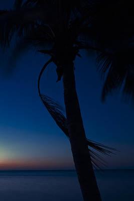 Photograph - Palms Viii by Scott Meyer
