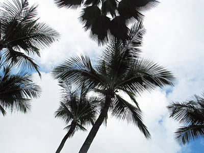 Photograph - Palms by Vikki Bouffard
