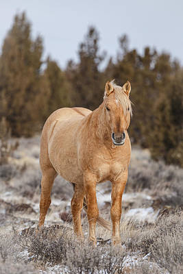 Forelock Photograph - Palomino Buttes Stallion by Wes and Dotty Weber