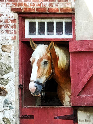 Photograph - Palomino By Barn Door by Susan Savad