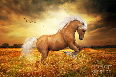 Golden Digital Art - Palomino Horse Sundance  by Shanina Conway
