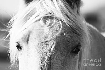 Photograph - Palomino by Jackie Farnsworth