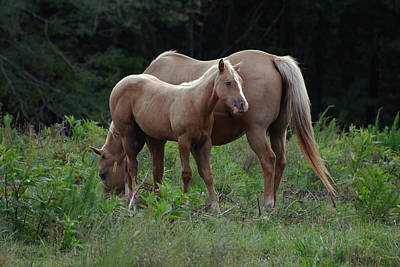 Palomino Mother And Daughter - C0726a Art Print