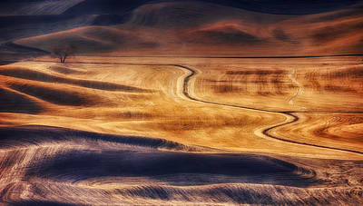 Photograph - Palouse Curves by Ray Still