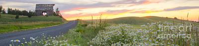 Photograph - Palouse Daisies Pano by Idaho Scenic Images Linda Lantzy
