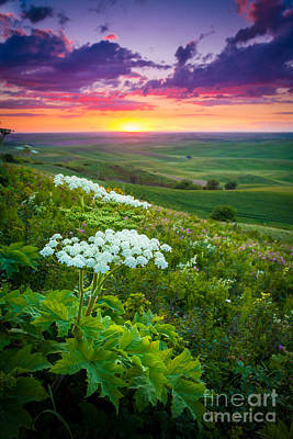 Landscape Natural Photograph - Palouse Flowers by Inge Johnsson