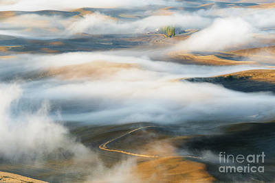 Palouse Gold Original by Mike Dawson