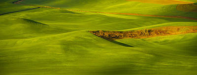 Photograph - Palouse Green by Kunal Mehra