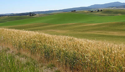Photograph - Palouse Or Tuscany by Anne Mott