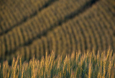 Photograph - Palouse Patterns by Doug Davidson