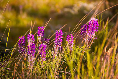 Photograph - Palouse Wildflowers by Kunal Mehra
