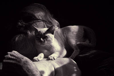 Tonkinese Photograph - Pals Napping by Linda Phelps