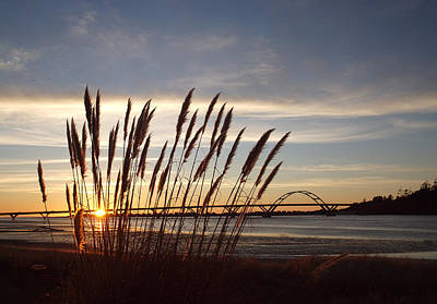 Photograph - Pampas By The Bay by HW Kateley