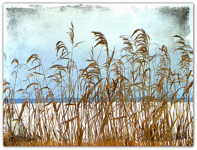 Pampas Grass Art Print by Dianne  Lacourciere