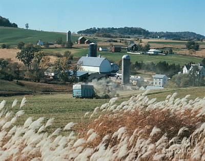 Photograph - Pampas Grass - Ne Iowa by Joan Liffring-Zug Bourret
