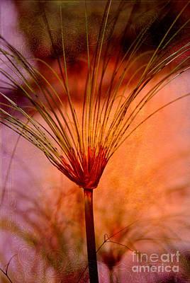 Pampas Grass Photograph - Pampas Grass - II by Susanne Van Hulst